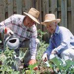 Работа на садовых участках уменьшает риск сердечно- сосудистых катастроф